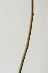 Bamboo rod on white background