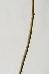 Bamboo rod on white background © Manuel