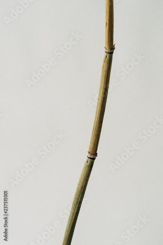Bamboo rod on white background