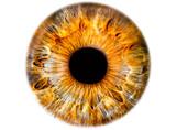 Iris ,das menschliche Auge, freigestellt