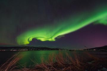 The polar arctic Northern lights aurora borealis sky star in Scandinavia Norway Tromso in the farm winter snow mountains © bublik_polina