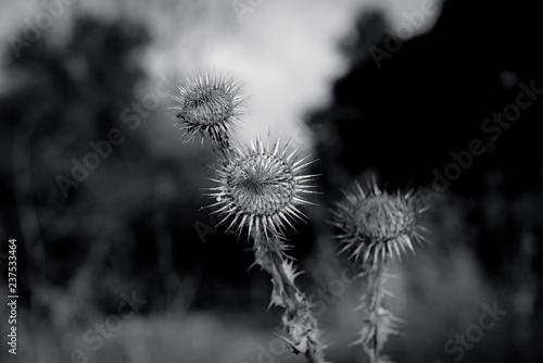 flower detail - 237533464