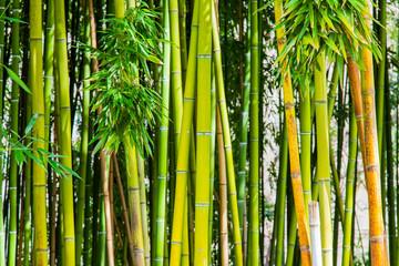 Picturesque thickets of a bamboo © Elena Belyaeva