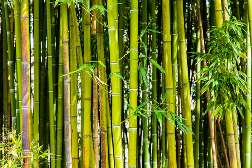 Picturesque thickets of a bamboo