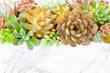 Detail of various types of succulent flowering houseplant arrangement in marble planter background