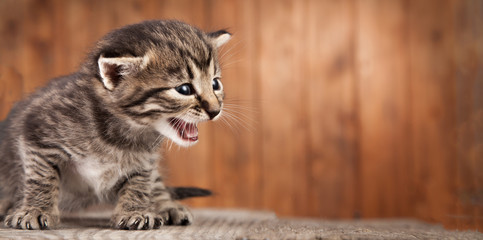 Mewing kitten on background of old wooden boards