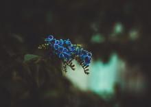 """Постер, картина, фотообои """"Blue Flower"""""""