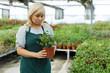 Mature woman  choosing  gardenia flowers in pot  in greenhouse