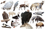 set of north american animals isolated - 237603430