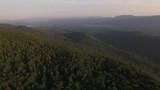 Green virgin forest - 237605626