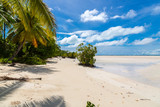 Sandy paradise beach of azure turquoise blue shallow lagoon, North Tarawa atoll, Kiribati, Gilbert Islands, Micronesia, Oceania. Palm trees, mangroves - 237609065