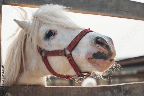 Cutest white horse portrait, lovely face