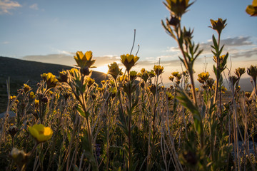 Wildflowers in Colorado © Steven Thomas