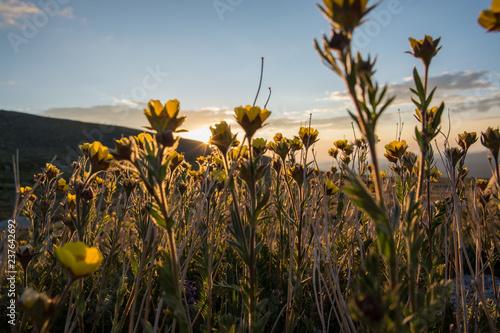 Wildflowers in Colorado © Steven Thomas