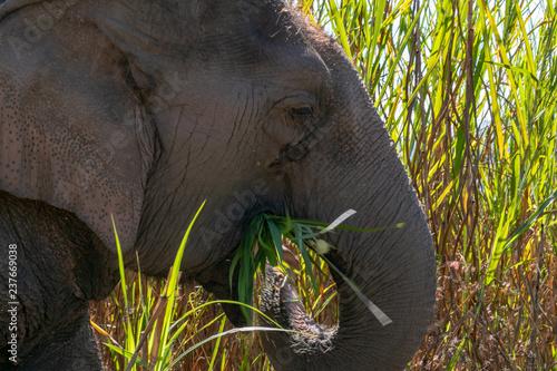 Plakat The Elephants