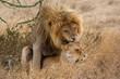 Passion unter Löwen