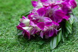 Fiote orchid flowers on a background of green grass close