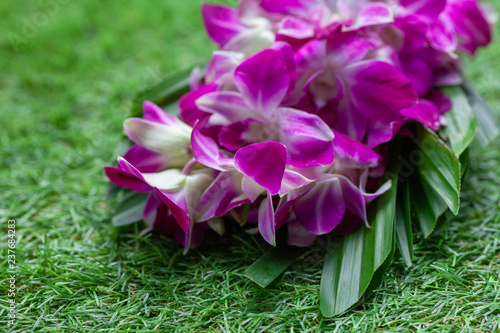 Fiote orchid flowers on a background of green grass close - 237684283