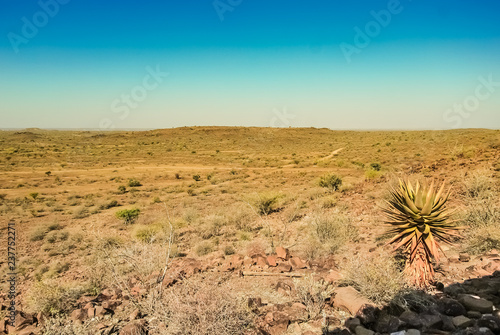 Landscape of the Kalahari desert with an Aloe tree in Namibia, Africa