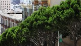Low angle, trees in downtown San Francisco - 237768616
