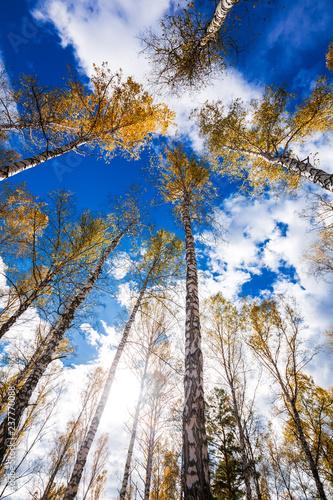 Autumn landscape. Western Siberia, Novosibirsk region, Russia - 237770088