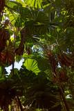 Australijskie lasy desczowe