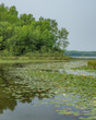 Quiet bay surrounded by forest and filled with waterlilies on a still day