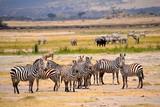 zebraherde mit anderen tieren ngorongoro krater