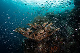 Schooling Fish Hover Over a Healthy Reef in Raja Ampat
