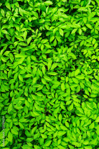 lush green leaves background - 237816216