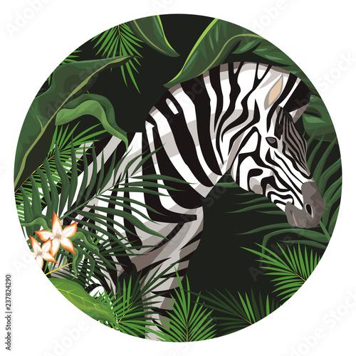 Zebra wild animal - 237824290