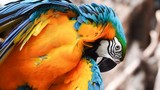 The eye blue and gold macaw bird pet animal wildlife