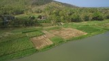 Aerial footage of corn farm field at riverside with backward maneuver crossing river - 237848203