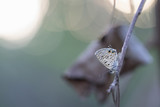 papillon sur nature zen