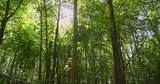 Dolly shot of a dense green forest with sunlight breaking through the trees. - 237874891