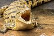Südafrika Krokodil bei Safari Nilkrokodil