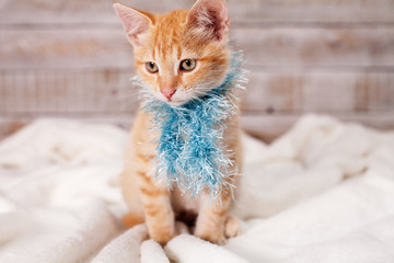 Cute kitten dressed for winter sitting - with blue fluffy scarf