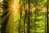 Sonne strahlt durch Laubwald - 237881611