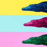 Minimal Contemporary collage art. Colors Crocodiles Mix. Life is colorful concept - 237932476