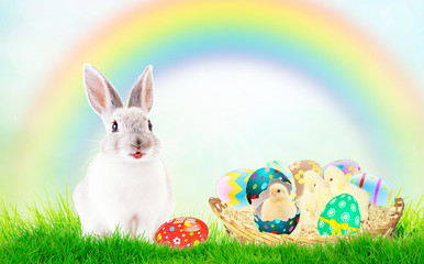 Cute newborn Chicks in pink and colorful shell. Green grass, blue sky, rainbow. The concept of the Easter holidays, the birth, life