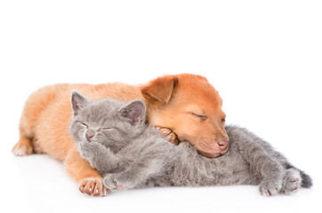 kitten lying with sleeping puppy and washing itself. isolated on white background