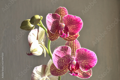 orchid flower background - 237997030