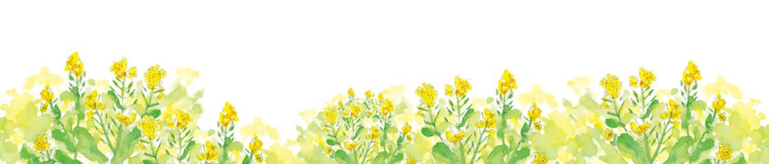 菜の花の道 © keikoTakamatsu