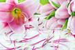 Tulpen und Lilien - 238022062