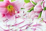 Tulpen und Lilien