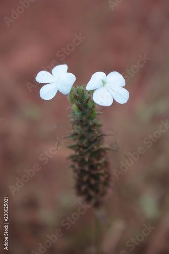 white flowers on a green background - 238025021