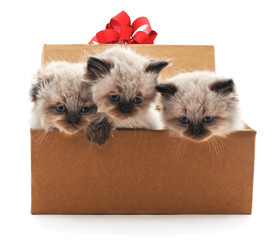 Kittens in a box.