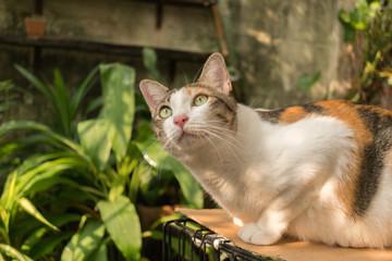 The cat in the garden is looking up. © jamesjoong