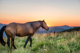 Brown horse grazing on a field at sunset