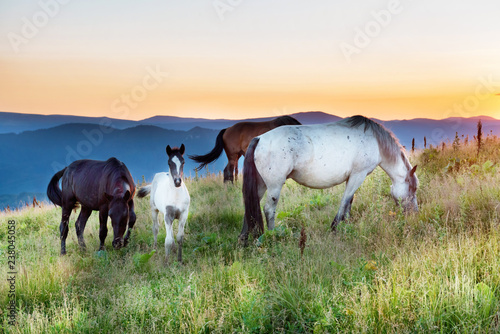 Horses grazing on a field at sunset
